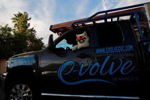 A dog inside an E-Volve Services Truck